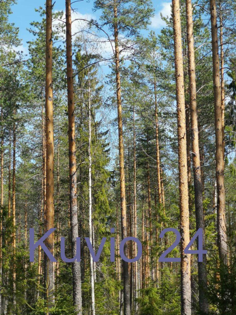 metsätila välitys myy metsä metsän myynti kuolinpesän metsätila metsäpalvelu metsurityö lkv metsän lkv metsätilan myynti metsänosto metsärahasto metsäarvio metsäsuunnitelma metsätilakauppa etuovi mhy metsätkuntoon metsäkeskus upm otso stora enso